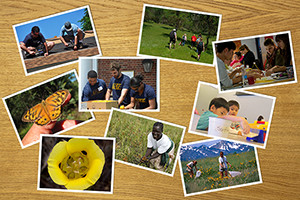 Postcards on a table showing people working in a food bank, building a house, hiking, catching butterflies, learning new things,